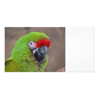 green parrot head view  bird photo card