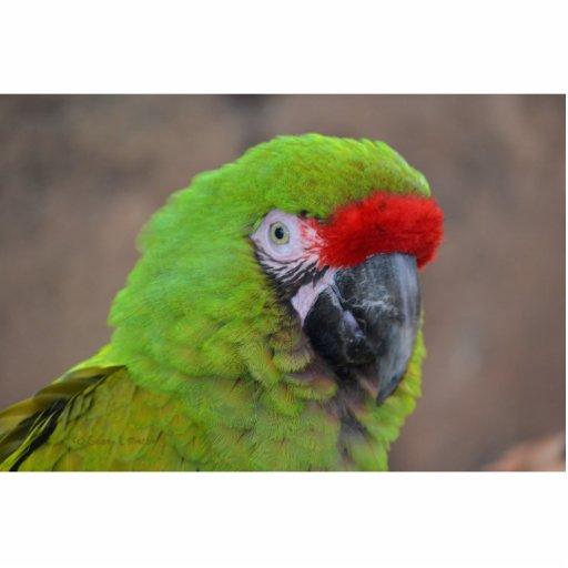 green parrot head view  bird photo sculpture