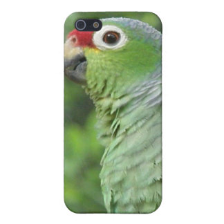 Green Parrot iPhone Case iPhone 5 Case