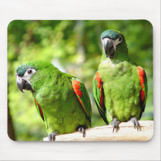 Green Parrot Mousepad 2