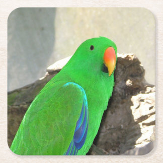 Green Parrot mousepad Square Paper Coaster