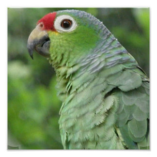 Green Parrot Photo Print