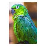 Green Parrot Photograph