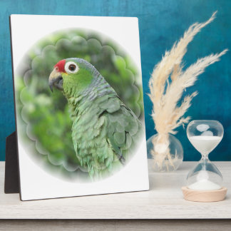 Green Parrot Plaque