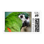 Green Parrot Postage