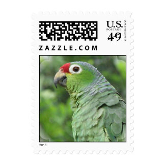 Green Parrot Postage Stamp