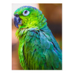 Green Parrot Postcard