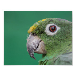 Green Parrot Posters