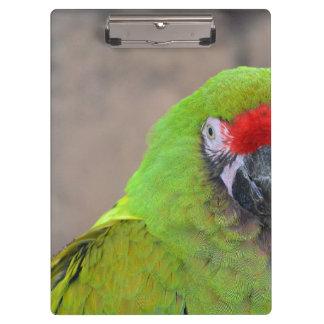 Green parrot red head bird image c clipboards