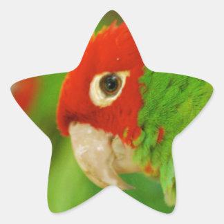Green parrot star sticker