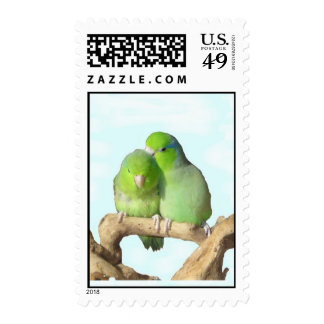 Green parrotlet pair stamp