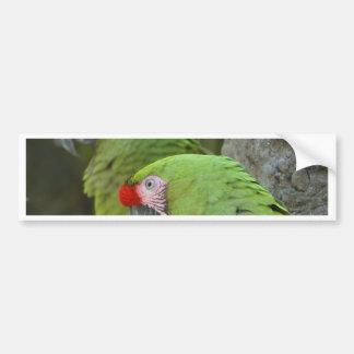 Green Parrots Bumper Sticker