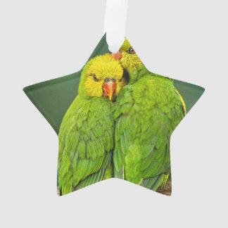 Green Parrots Love Birds Photography