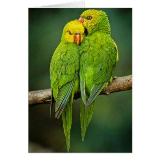 Green Parrots Love Birds Photography Card