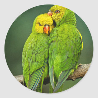 Green Parrots Love Birds Photography Classic Round Sticker