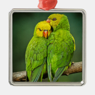 Green Parrots Love Birds Photography Metal Ornament