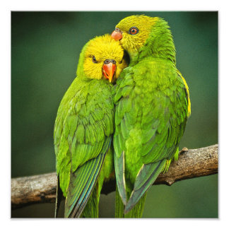 Green Parrots Love Birds Photography Photo Print