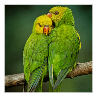 Green Parrots Love Birds Photography Posters