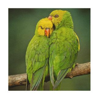 Green Parrots Love Birds Photography Wood Print