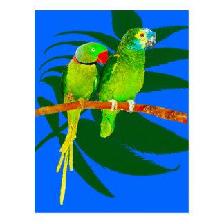 Green Parrots on Blue Postcard
