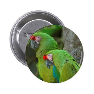 Green Parrots Pinback Button
