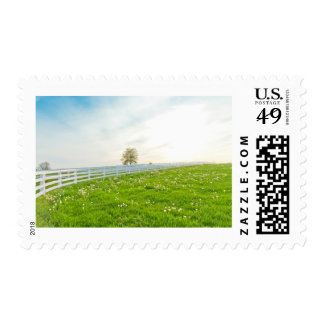 Green pastures of horse farms. stamps