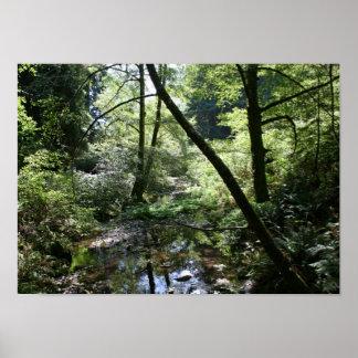 """Green Peace"", Muir Woods Poster"