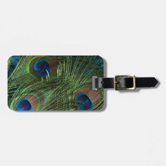 Green Peacock Feather Luggage Tag