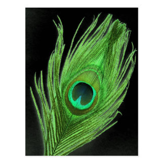 Green Peacock Feather on Black Postcard