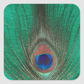 Green Peacock Feather Square Sticker