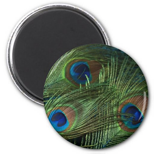 Green Peacock Feathers 2 Inch Round Magnet