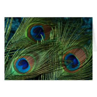 Green Peacock Feathers Card