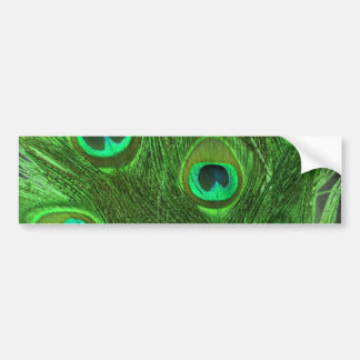 Green Peacock Feathers on Black Bumper Sticker