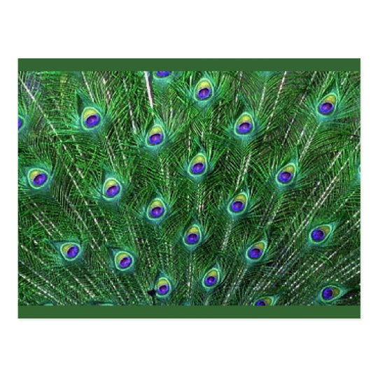 Green Peacock Feathers RSVP Postcard
