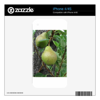 Green pears hanging on a growing pear tree decals for iPhone 4S