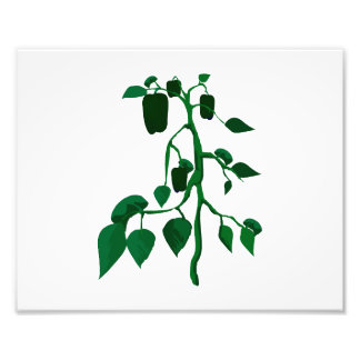 Green peppers on green plant graphic photo art