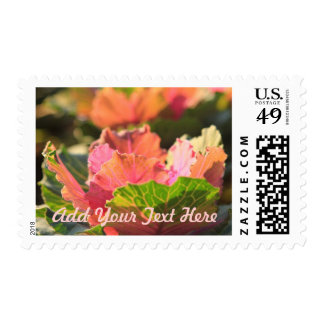 Green Pink Cabbage Flower Vegetable Afternoon Sun Postage