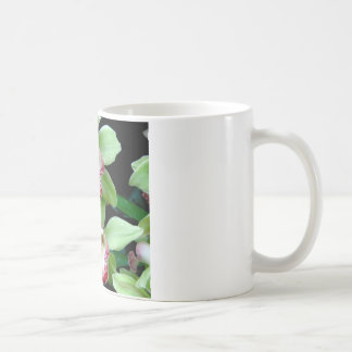 Green & Pink Cymbidium Orchid Mug