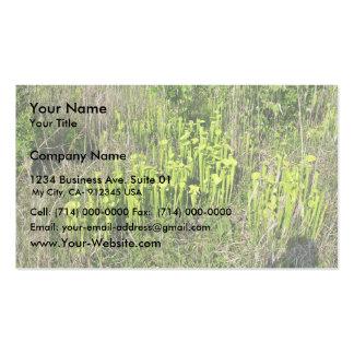 Green pitcher plant bog (Sarracenia oreophila) Business Card Template