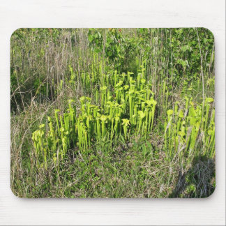 Green pitcher plant bog Sarracenia oreophila Mousepads