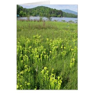 Green pitcher plant (Sarracenia oreophila) Greeting Card