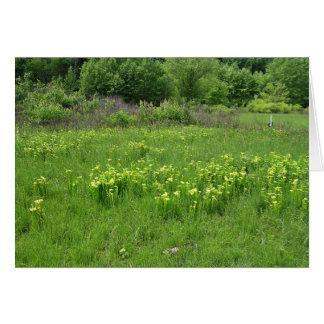 Green pitcher plant (Sarracenia oreophila) habitat Greeting Card