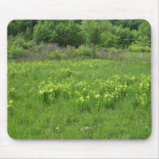 Green pitcher plant Sarracenia oreophila habitat Mousepad