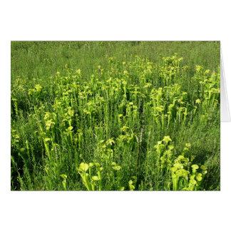 Green pitcher plants (Sarracenia oreophila) Greeting Card