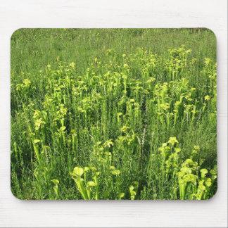Green pitcher plants Sarracenia oreophila Mousepad