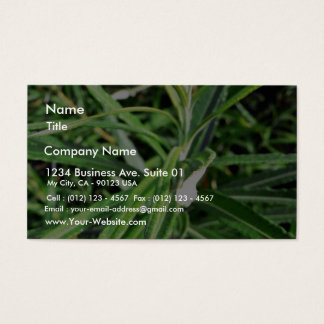 Green Plant Business Card