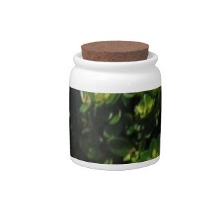 Green Plant Candy Jars