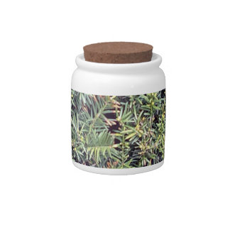 Green plant candy dish