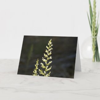 Green Plant Cards