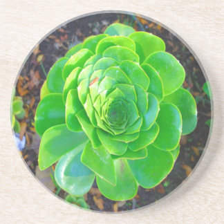Green Plant Coasters